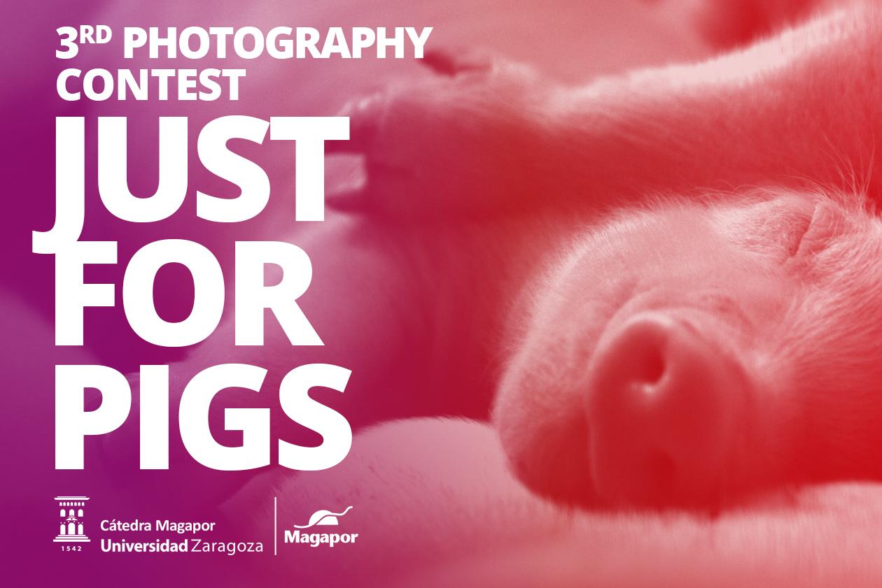 Photography Contest Magapor