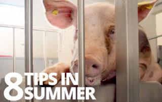 Tips Magapor Summer