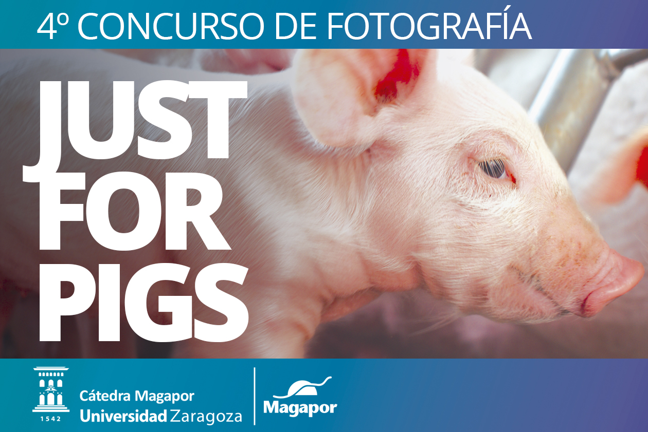 Fotografía sobre produccíon porcina