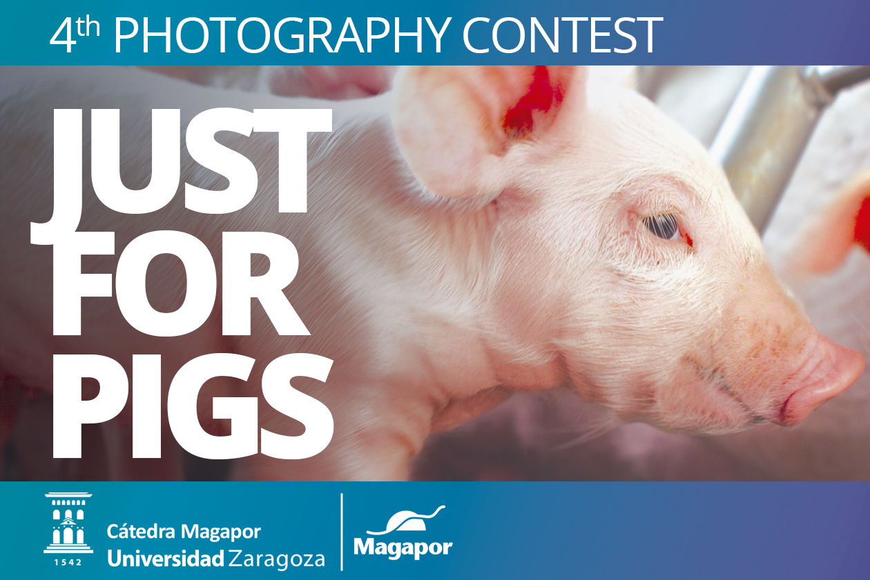 4th Magapor Photography contest