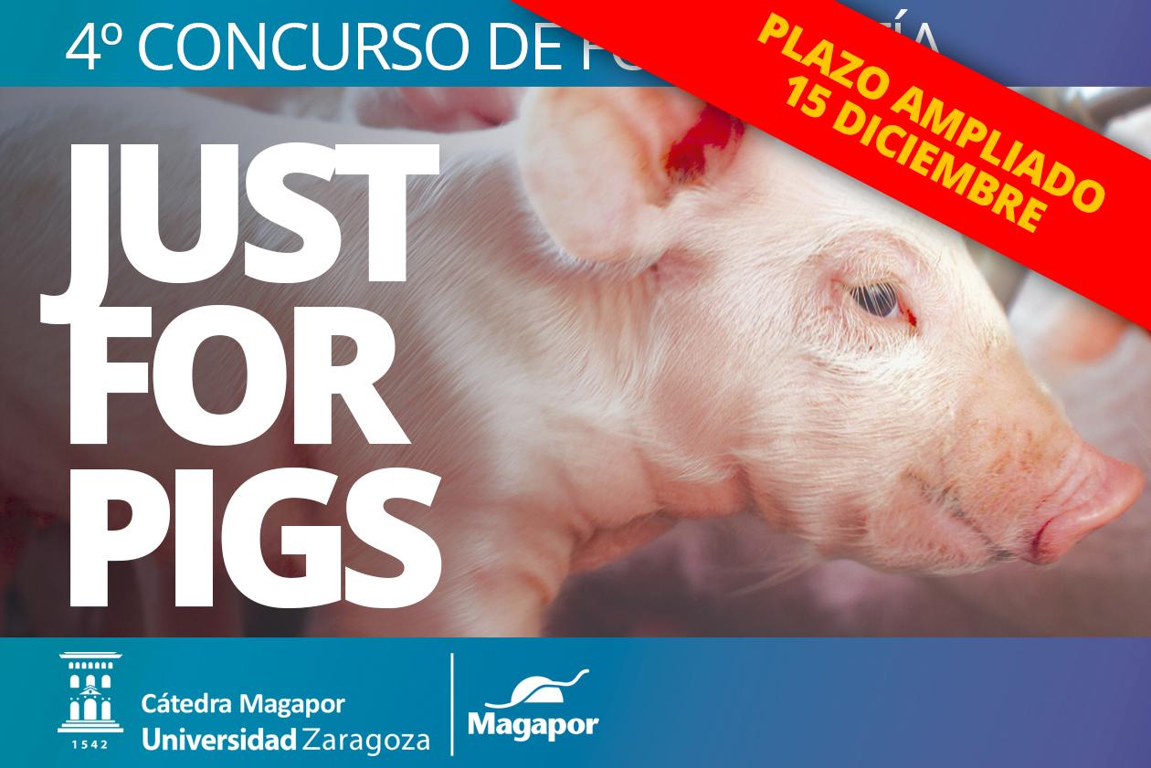 nuevo límite concurso Magapor