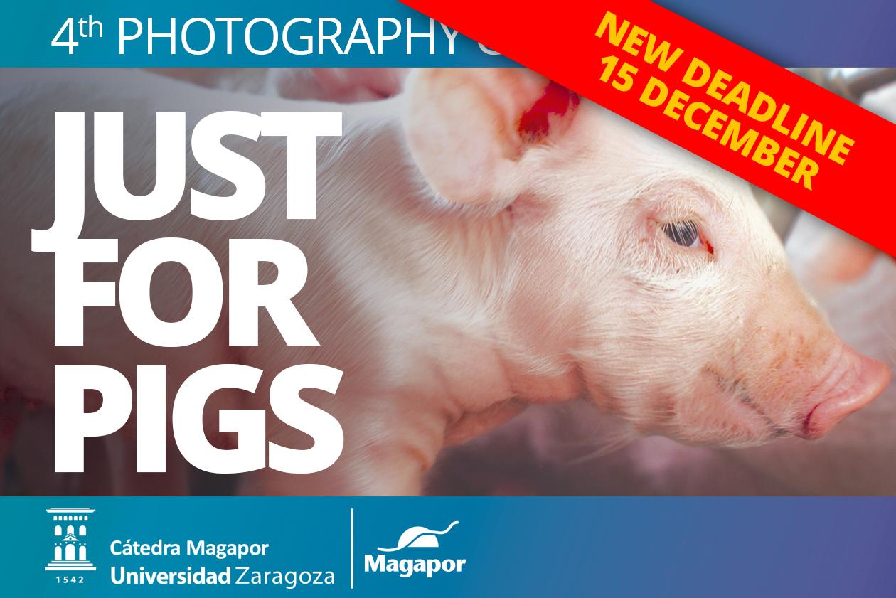 Magapor New deadline