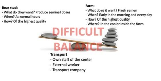 Balance between Boar stud-Transport-Farm Magapor