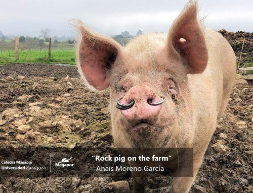 Resolución concurso fotográfico «Just for Pigs» 2020