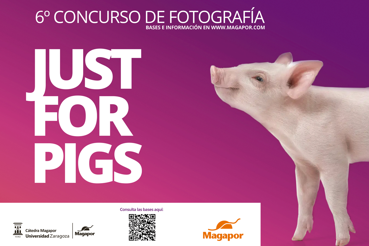 VI Concurso fotografia Magapor